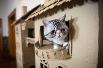 cardboard-cat-house-new-zeland