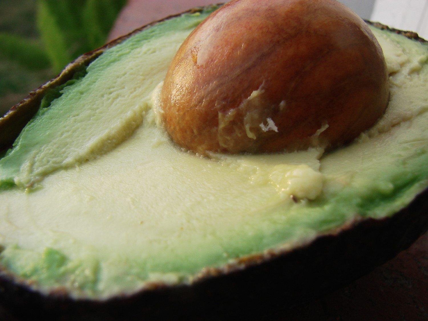 avocado photo