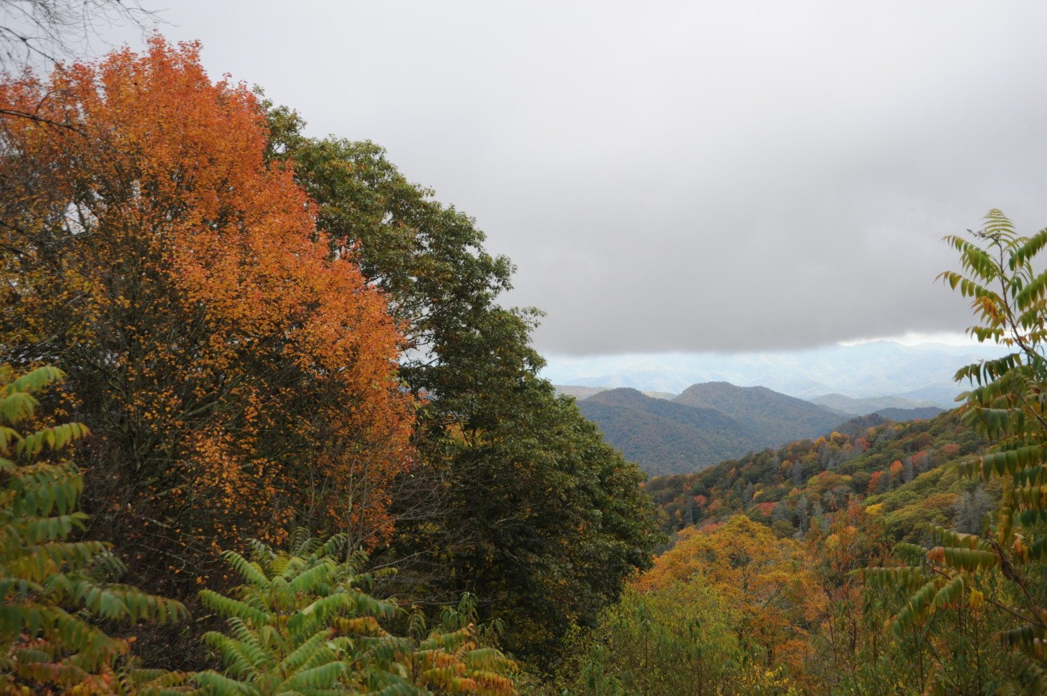 fall Great Smoky Mountains national park photo
