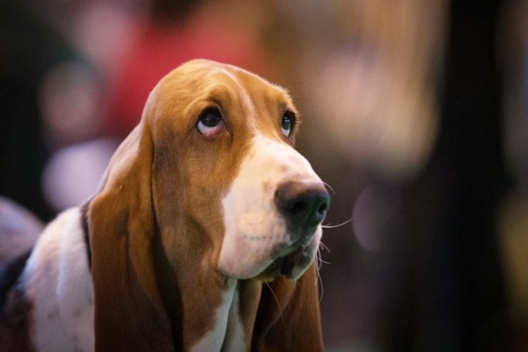 Crufts 2017 - Day One